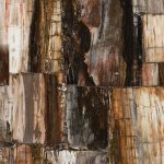 Concetto | 8331 Petrified Wood Classic